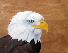 La veillance de l'aigle (14″ x 18″) 189$ + tx